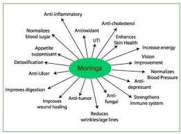 Moringo Miracle
